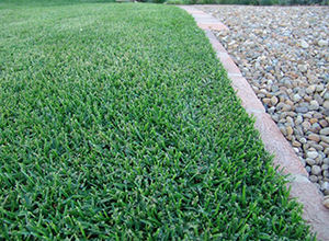 Synthetic Turf Care and Maintenance