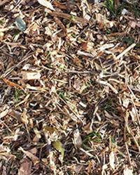 Forest Mulch Fresh
