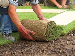 Installation of Lawn