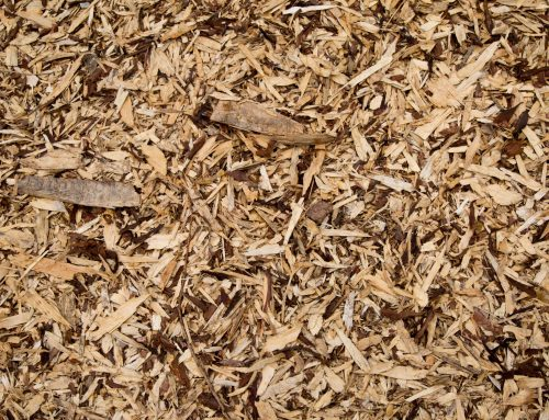 The Best Decorative Mulch for Your Garden