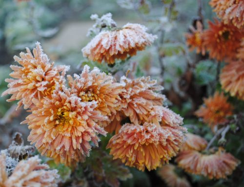 Tips to Keep Your Garden Healthy During Winter